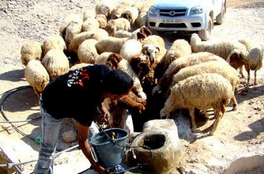 Palestinian man pouring water for sheeps from a water cistern reconstructed during a joint DCA and YMCA project assisting the vulnerable communities in Area C in the occupied Palestinian territories.